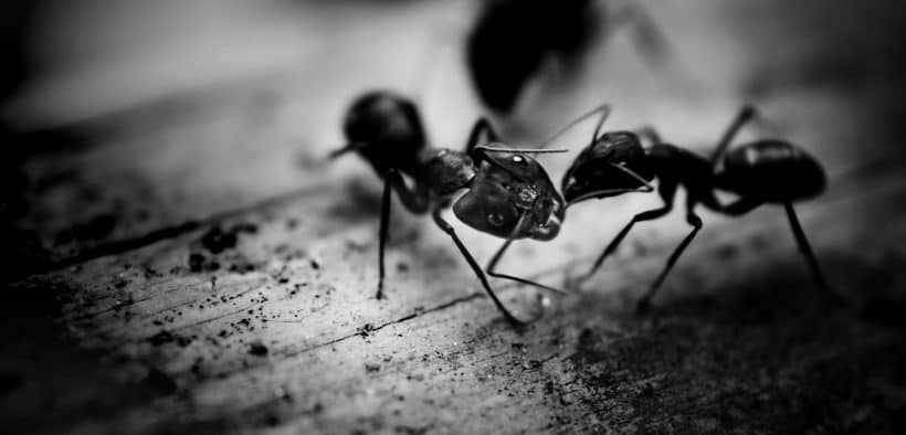 How-to-Get-Rid-of-Ants
